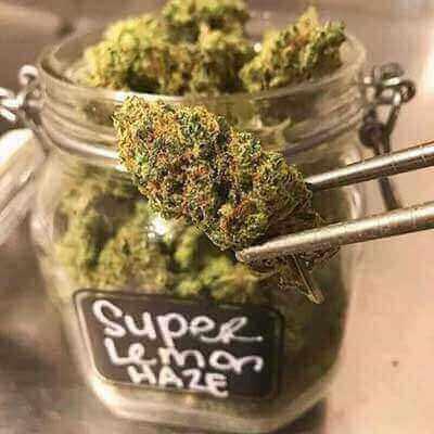 Craigslist sydney weed